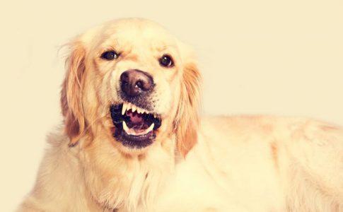 Los perros más agresivos y peligrosos