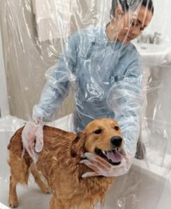 baño perro