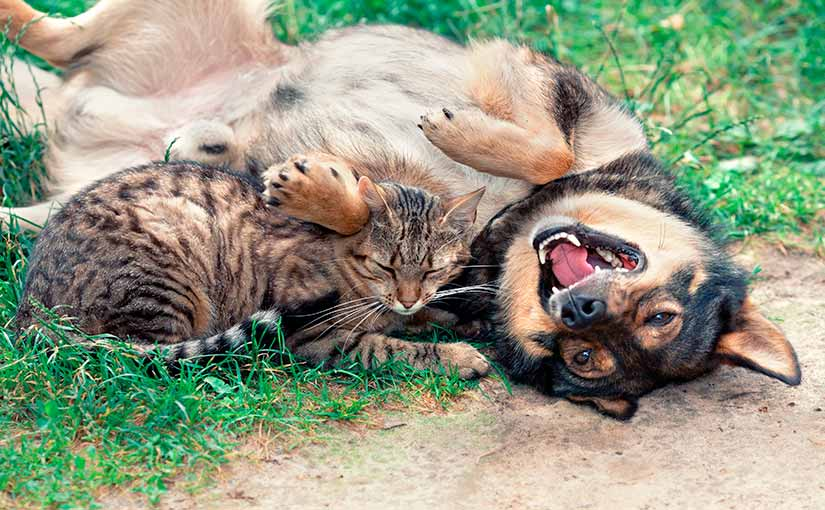 Jugar con el perro