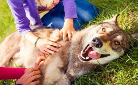 Cosas que les gustan a los perros
