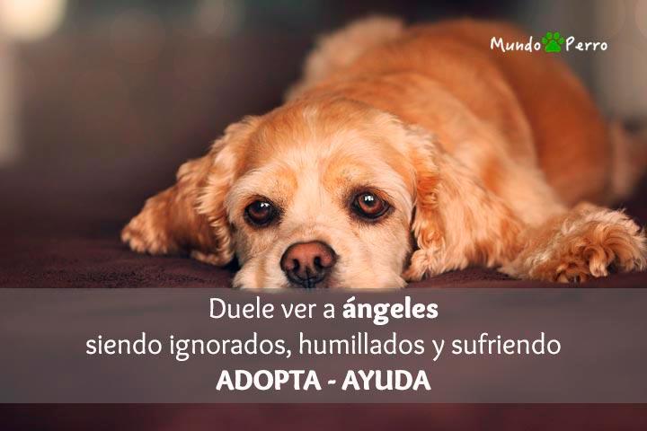 Frases De Perros En Adopción Mundo Perro