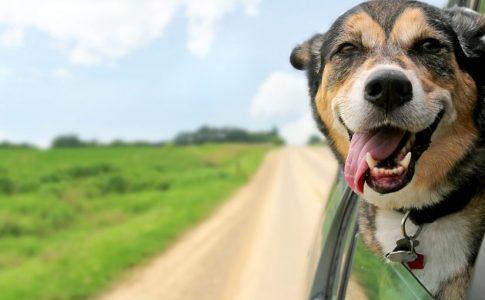 ¿Por qué los perros babean en el coche?