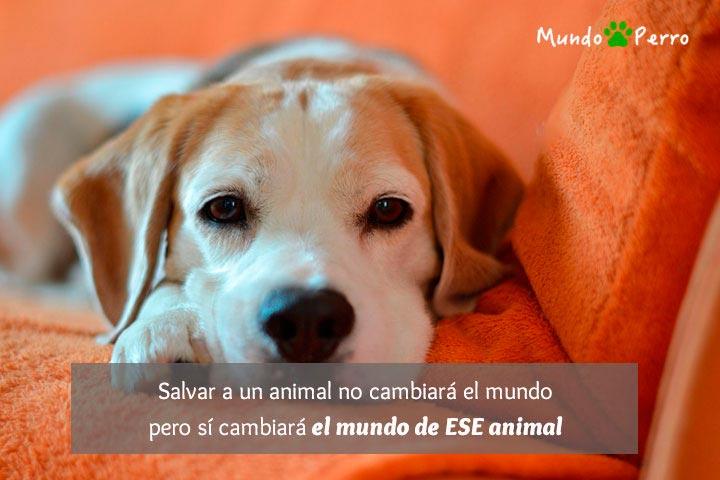 Frases De Perros Callejeros Mundo Perro