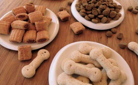 Cuáles son los frutos secos que pueden comer los perros