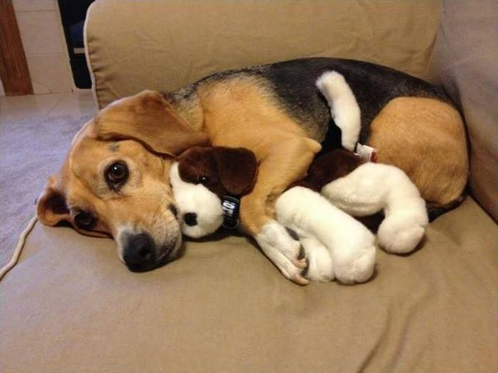 Perro con su peluche mundo perro - Peluches con fotos ...