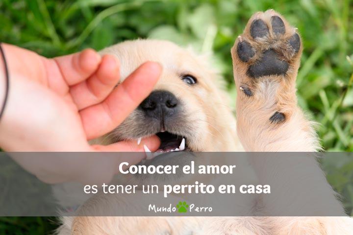 Frases De Perros Dedicatorias Para Perros Citas De Perros