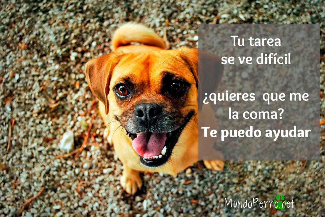 Frases De Perros Divertidas Mundo Perro