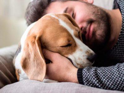 Los perros adoran dormir con los humanos