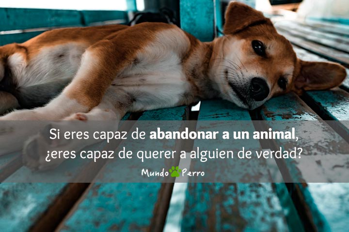 Frases De Perros Fallecidos Mundo Perro
