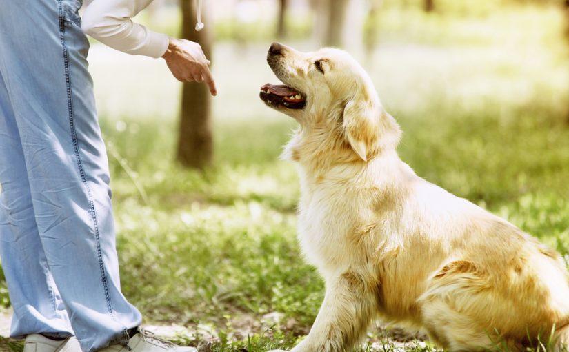 Cómo alimentar a un perro obeso