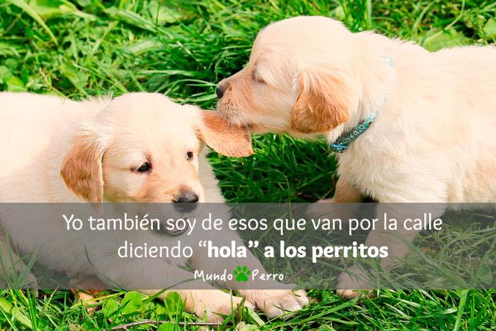 Frases De Perros Graciosas Mundo Perro
