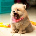 Cómo evitar que mi perro ladre cuando se queda solo