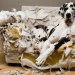 por que mi perro muerde los muebles