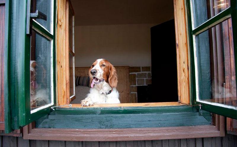 Cómo saber si tu perro se aburre en casa