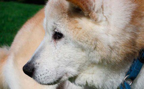 ¿Puede un perro viejo aprender trucos nuevos?