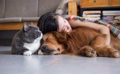 Convivencia perros y gatos