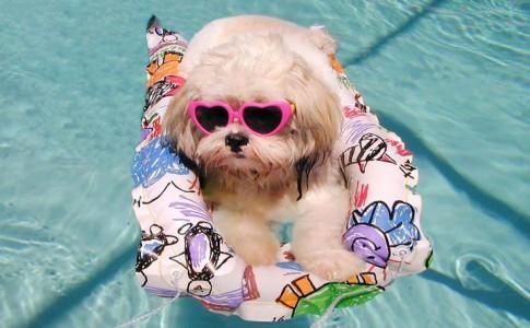 Comprar piscina para perros