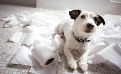 ¿¿Por qué los perros se comen el papel?
