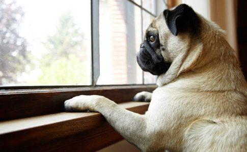 ¿Qué hago si mi perro llora cuando me voy?