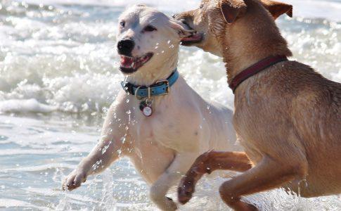 ¿Por qué los perros se quedan enganchados al aparearse?