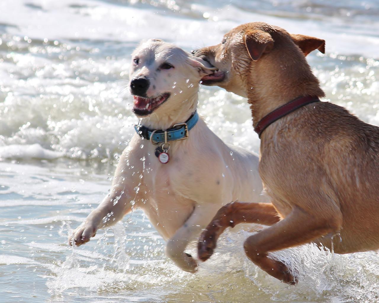 Accesorios Para Baño Que Se Pegan:Por qué los perros se quedan pegados al aparearse?