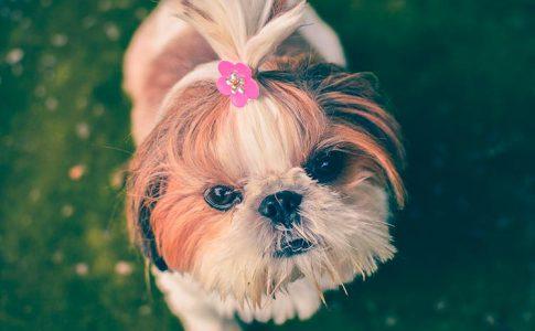 ¿Tienen los perros gases tras el parto?