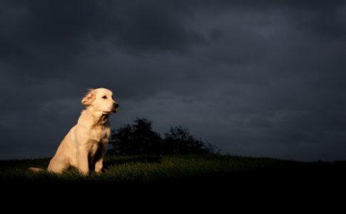 ¿Qué hago si mi perro llora mucho por las noches?