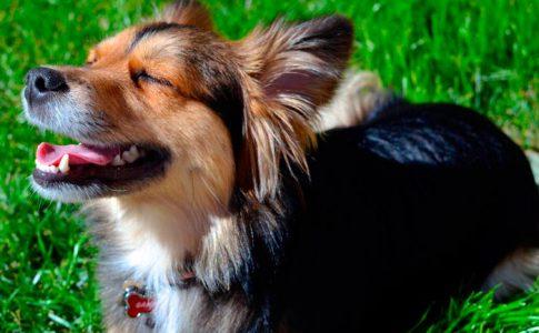 Beneficios de tomar el sol para los perros