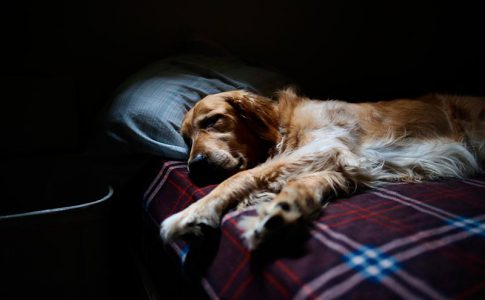 ¿A qué se debe la tensión alta en el parto del perro?