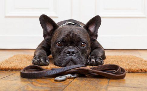 Qué significa que un perro no ladre