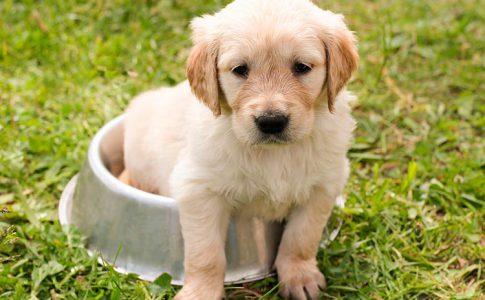 ¿Puede ser que tu perro no quiera comer pienso nuevo?
