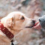 ¿Qué hago si mi perro engulle y no mastica el pienso?