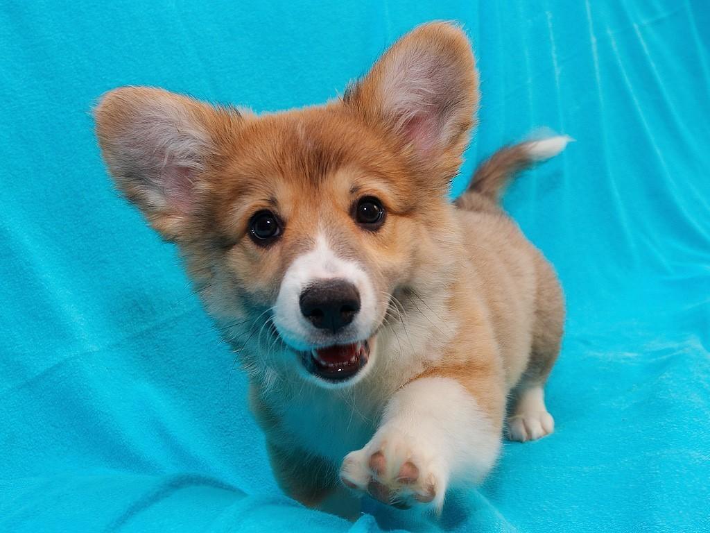 presentacion-cachorro-familia