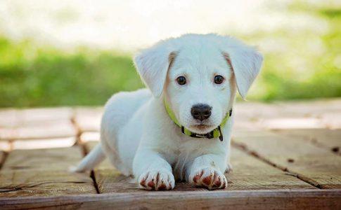 ¿Cómo desparasitar a un perro recién nacido?
