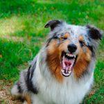 ¿Existe algún tratamiento contra la agresividad de los perros?