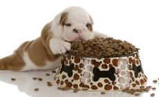 Qué puede comer el cachorro de perro