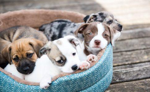 ¿Cómo atender el parto del perro?