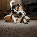 Ejercicio para perros en casa