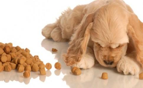 Características del pienso para perros