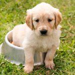 Qué hacer cuando el cachorro llora mucho