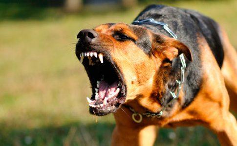 Cómo actuar ante el ataque de un perro