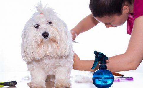 Herramientas para cortarle el pelo a un perro
