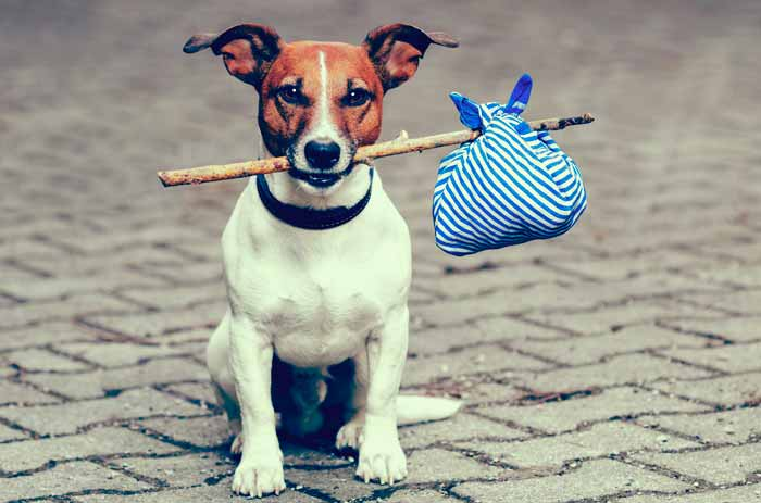 Cosas necesarias para viajar con perro