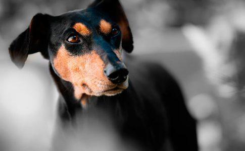Pastillas para desparasitar internamente a un perro