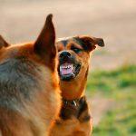 Sacar a pasear a un perro agresivo