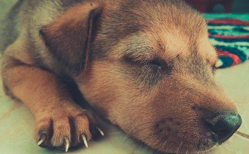 Los productos que necesitas para desparasitar internamente a un perro