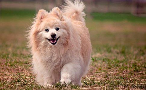 Cuáles son las razas de perros que menos crecen