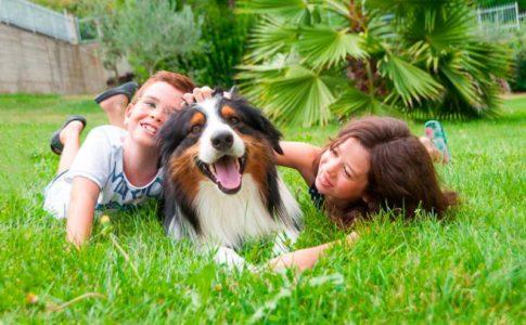 Cuáles son los perros más cariñosos