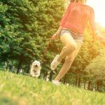 Cuáles son los perros pequeños hipoalergénicos