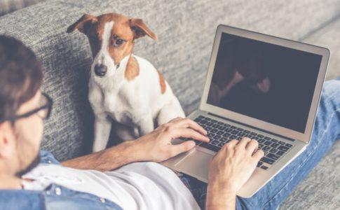 Perros pequeños que pueden vivir en pisos